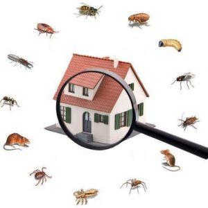 plagas-en-hogares